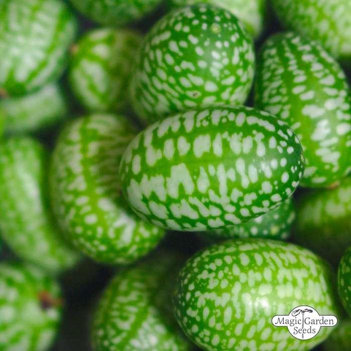Exotic and Tropical Plants Seeds - Samen & Saatgut