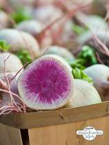 Watermelon radish 'Red Meat' (Raphanus sativus) #0