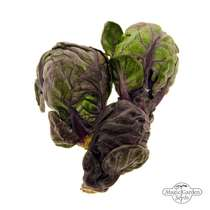 Purple Brussels Sprouts 'Red Ball' (Brassica oleracea) #1