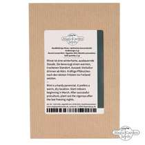 Round leaved mint, Egyptian mint (Mentha suaveolens) conventional - bulk quantity (1g / 10000 seeds) #3