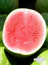 Watermelon 'Crimson Sweet' (Citrullus lanatus) organic #1
