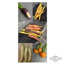 Colourful Carrots - Seed kit gift box #5