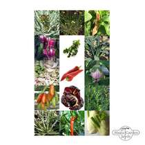 Italian Vegetable Rarities - Seed Kit Gift Box #5