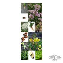 Aromatic Wild Vegetables - Seed kit gift box #5