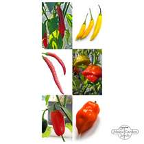 Chili Pepper Classics - Seed kit gift box #3