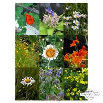 'Edible flowers' seed kit gift box #5
