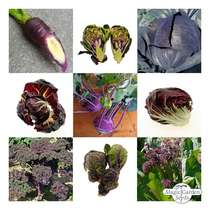 Purple Vegetables - seed kit gift box #5