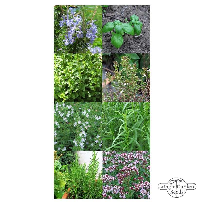 'Herbes de Provence' seed kit gift box