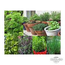 'Windowsill kitchen herbs' seed kit gift box #3