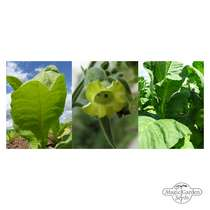 'Shisha tobacco' seed kit gift box #3