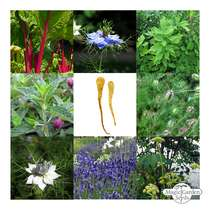 The Cottage Garden Assortment - Seed kit gift box #5