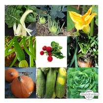 'Organic Vegetable Variety' seed kit gift box #5
