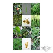 The Medieval Garden - Seed kit gift box #5