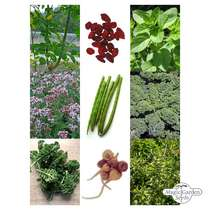 'Superfoods' seed kit gift box #3