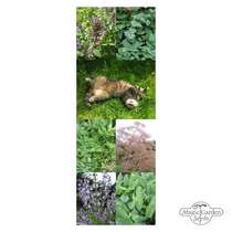 Seed gift box: 'Happy Cat Herbs' #5