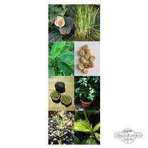 'Tropical agricultural crops: coffee, tea, rice, passion fruit & banana' seed kit gift box #5
