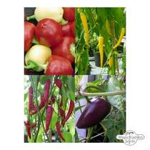 'Mixed colour ground chilli powder' seed kit gift box #3