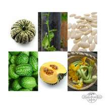 Climbing Vegetables  - Seed kit gift box #5