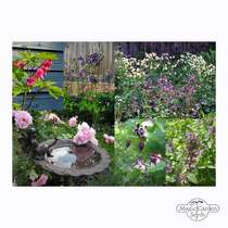 'Romantic Flower Garden' seed kit gift box #5