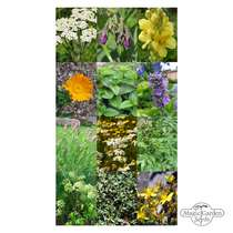 'European Medicinal Plants' seed kit gift box #5