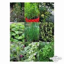 'Perennial kitchen herbs for the garden', seed kit gift box #3