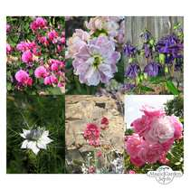 Flower Miracle - seed kit gift box #5