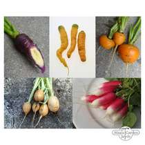 Carrots & Radishes - Seed kit gift box #3