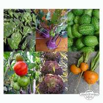 'Urban Gardening' seed kit gift box #5