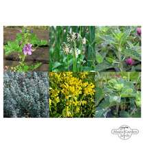 Healing Mountain Herbs - Seed kit gift box #3