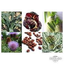 Old Italian Vegetables  (Organic) - Seed kit gift box #5
