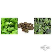 'Early Vegetables - Organic' seed kit gift box #3
