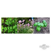 'Kitchen herbs for the window - organic' seed kit gift box #3