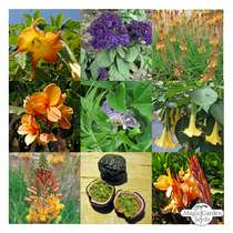 Exotic Beauties For Conservatories & Terraces - Seed kit gift box #3