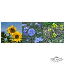 Proven Plants For Oil Production (Organic) - Seed kit gift box set #3