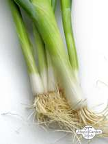 Bunching onion 'Ishikura' (Allium fistulosum) #0