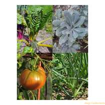 Sowing & growing gift kit: '4 colourful heirloom vegetable varieties' #5