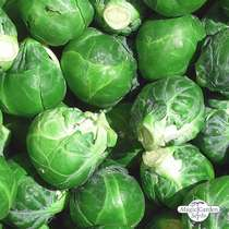 Brussels sprouts 'Noisette' (Brassica oleracea) #0