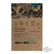 Snake flower, Burn jelly plant (Bulbine frutescens) organic #1