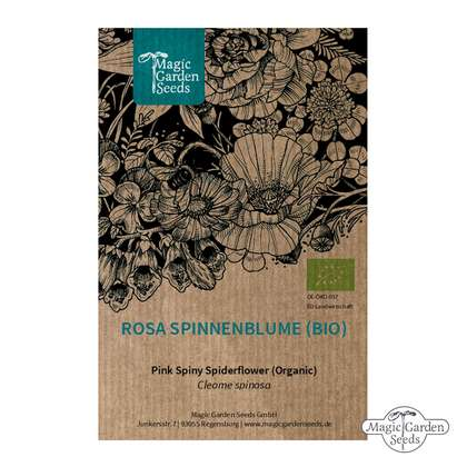 Pink Spiny Spiderflower (Cleome spinosa) organic