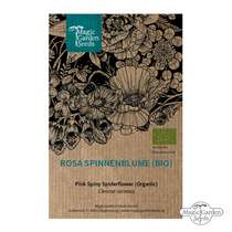 Pink Spiny Spiderflower (Cleome spinosa) organic #0
