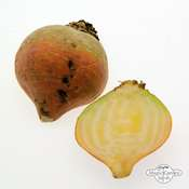 Yellow beetroot 'Golden' (Beta vulgaris) seeds