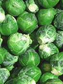 Brussels sprouts 'Noisette' (Brassica oleracea)