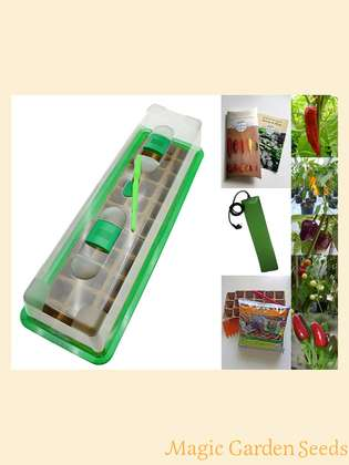 Chili cultivation set (heated):' Professional - Spice Chilis', 5 rare Eastern European varieties of chili seeds, with propagator, heating mat & sowing accessories
