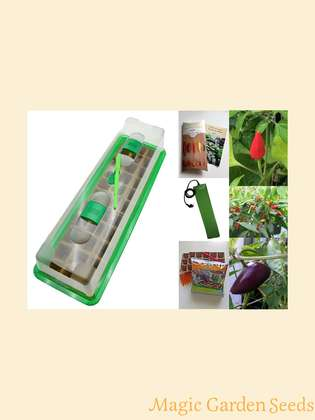 Chili-cultivation set (heated):' Professional - Bushy chilli varieties for pots', 3 richly bearing small remaining chili seed varieties with propagator, heating mat & sowing accessories