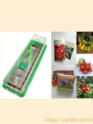 Tomato Cultivation Set (unheated): 'Organic cocktail tomatoes', 3 aromatic tomato seed varieties with propagator & sowing accessories