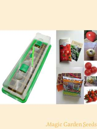 Tomato Cultivation Set (unheated): 'Robust outdoor tomatoes', 5 tomato seed varieties with propagator & sowing accessories
