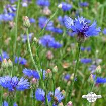 Wildflower Mixture (10g suitable for approx. 5m² area) #12