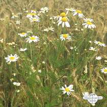 Wildflower Mixture (10g suitable for approx. 5m² area) #2