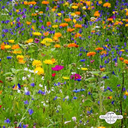 Wildflower Mixture (10g suitable for approx. 5m² area)