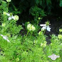 Wildflower Mixture (10g suitable for approx. 5m² area) #8